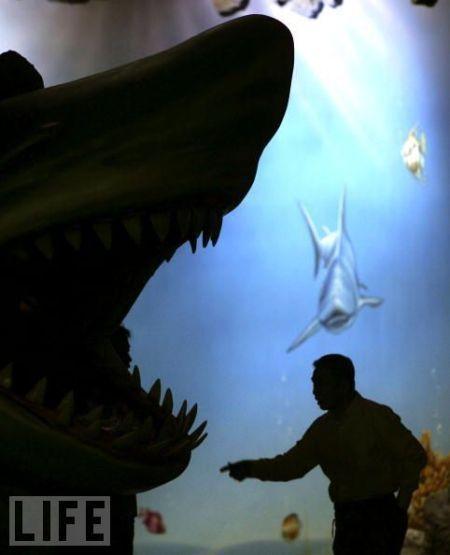 Sharks' jaws (25 pics)