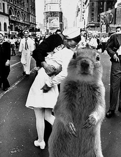 Be careful, the Crasher Squirrel is everywhere!! (29 pics)