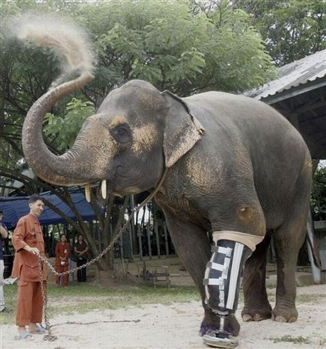 A gift for an elephant (13 pics)