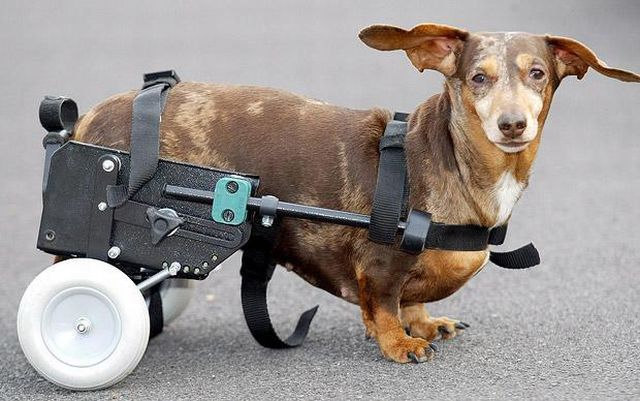 How people help disabled animals (14 pics)