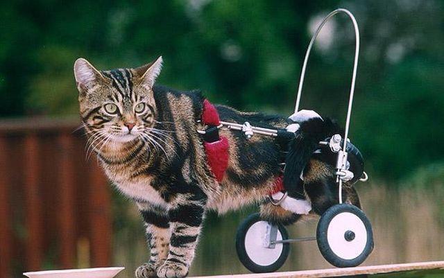 How People Help Disabled Animals 14 Pics Izismile Com