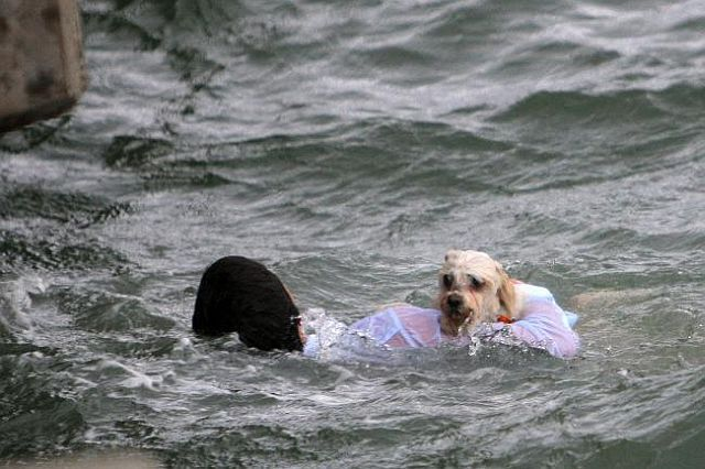 Great shots of a dog rescue (18 pics)