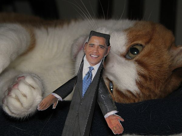 Cat that hates Obama ;) (4 pics)