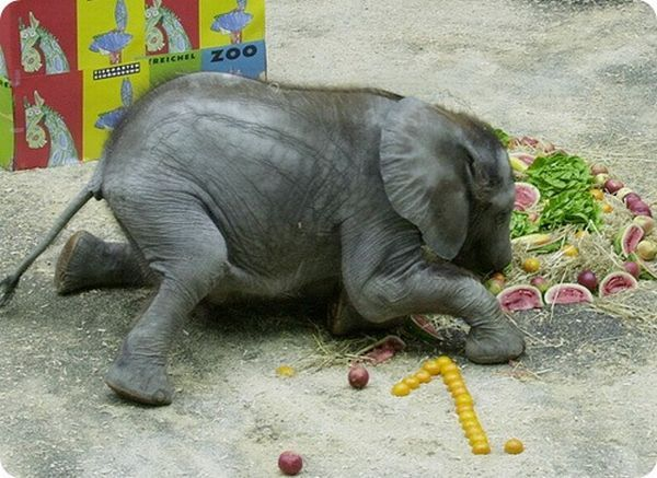 Animal birthdays in zoos )) (7 pics)