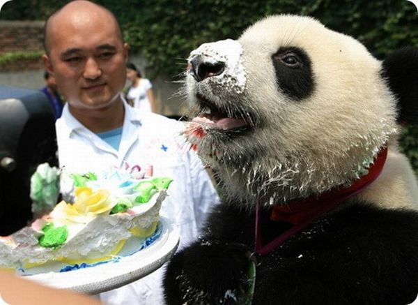 Animal birthdays in zoos )) (7 pics)