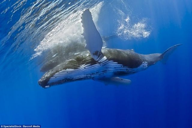 Swimming with a whale (4 pics)