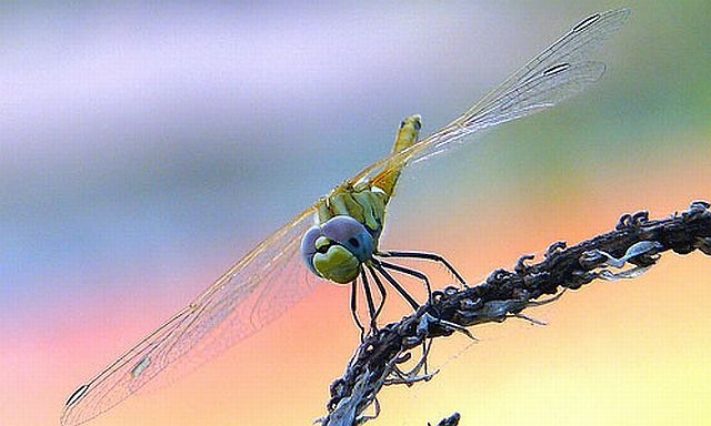 Macro photography. The best of the best (85 pics)