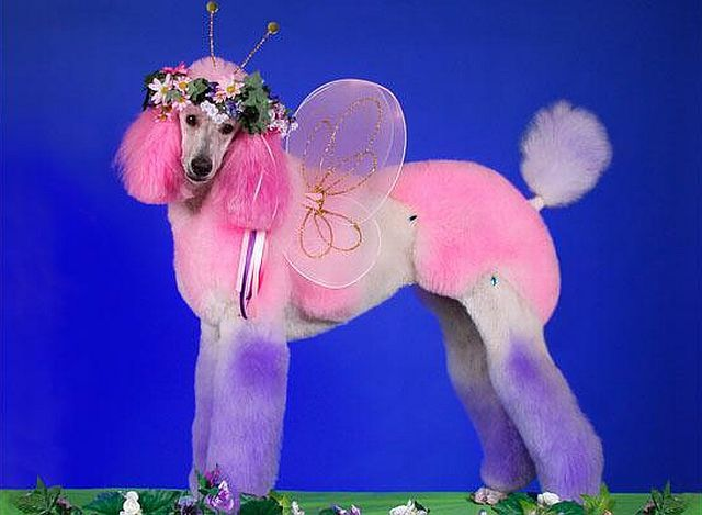 When poodles are transformed into other animals!! (14 pics)