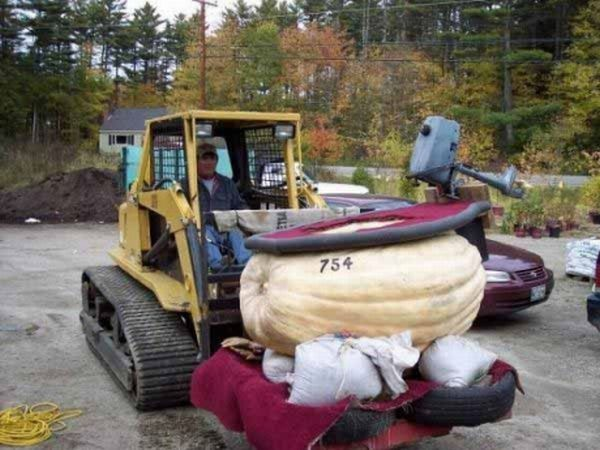 A motorboat made from a giant pumpkin (6 pics)