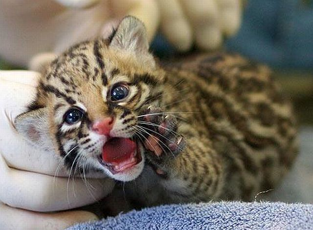 Positive Emotion Of The Day Baby Animals Born At Zoos 26 Pics