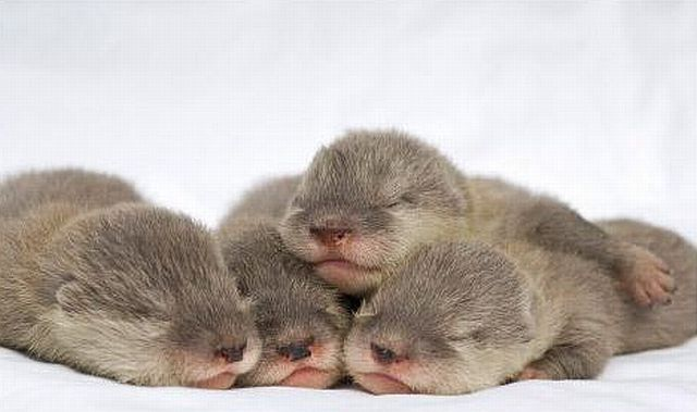 Positive emotion of the day. Baby animals born at zoos (26 pics)