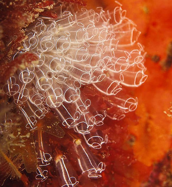 Amazing pictures of the marine life taken beneath the North Sea (15 pics)