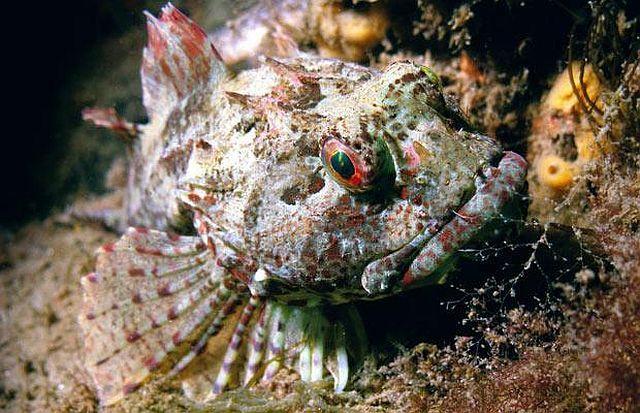 Amazing pictures of the marine life taken beneath the North Sea (15 pics)