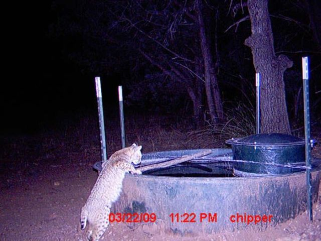 Animals coming to drink at night (9 pics)