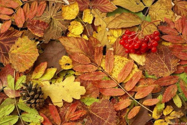 Beautiful autumn-themed pictures (40 pics)