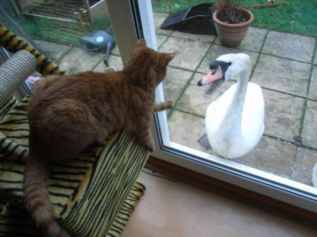 These funny animals (31 pics)