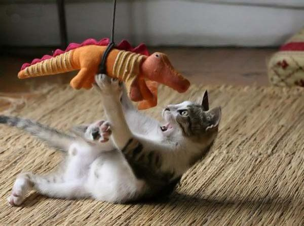 Fierce fight of predators (5 pics)
