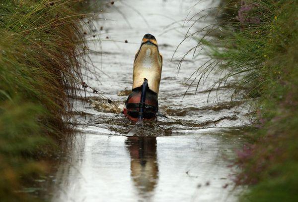 2009 World Bog Snorkeling Championships (14 pics)