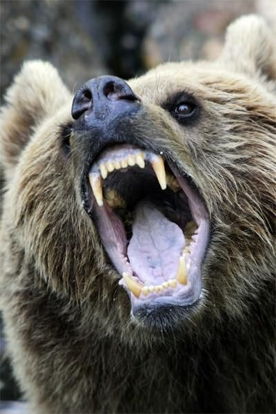 Animals with the mouth wide open (39 pics) - Izismile.com