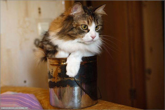 Cat likes too much a bucket (8 pics)