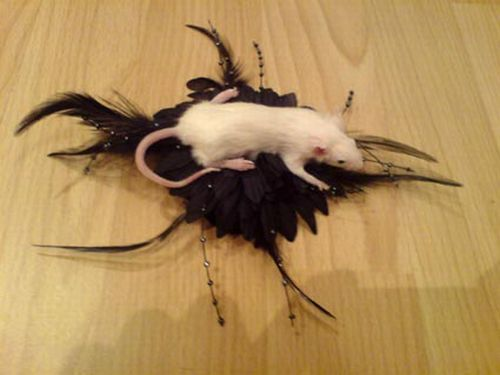 Taxidermy accessories become more and more popular (17 pics)