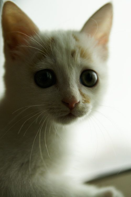 Touching story of one little kitten (18 pics)