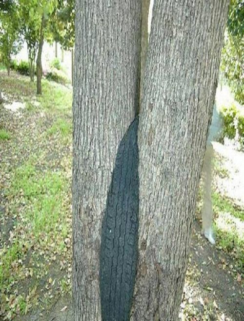 Power of trees (39 pics)