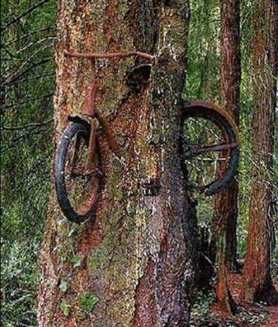 Power of trees (39 pics)