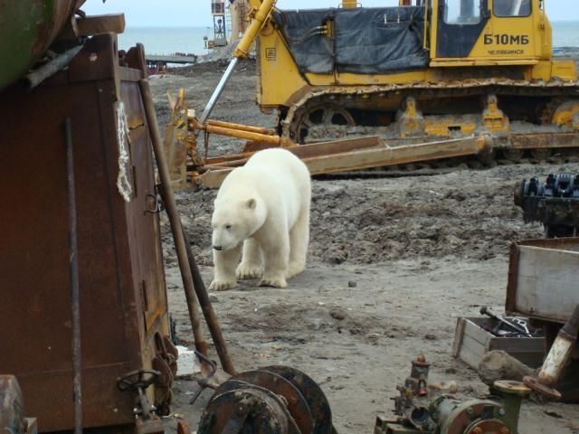 Uninvited guest on a construction site (18 pics)
