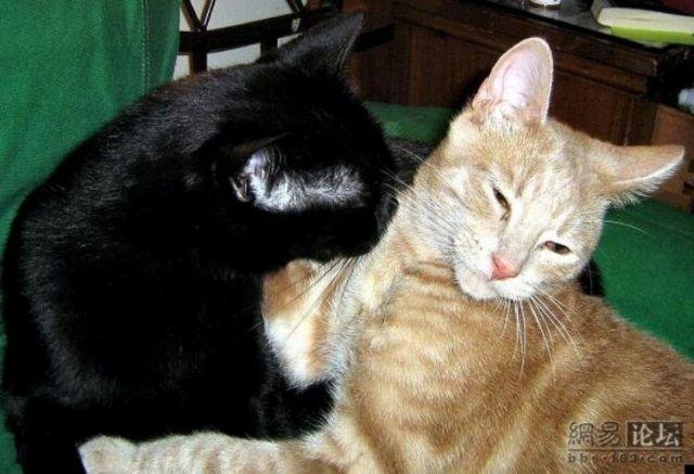Kissing cats (5 pics)