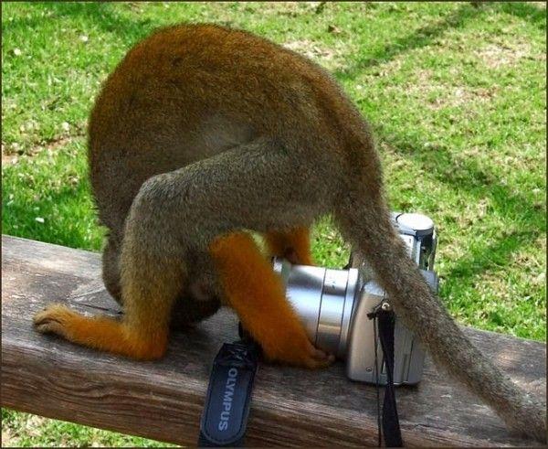 Animal photographers and models (36 pics)