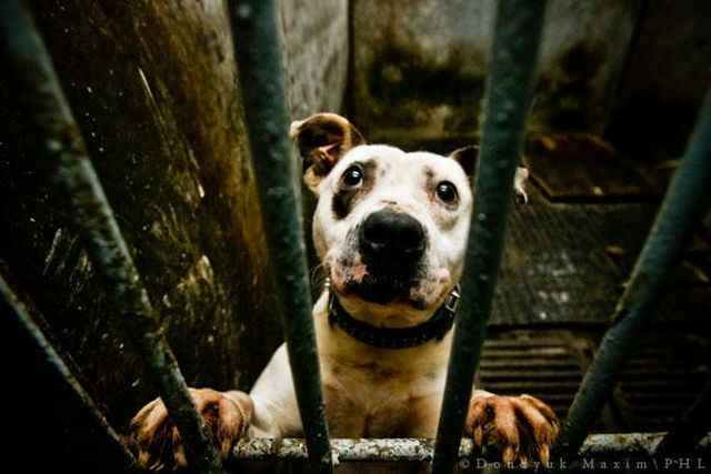 Dog shelter (19 pics)