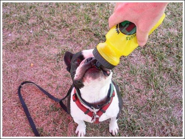 Thirsty animals (26 pics)