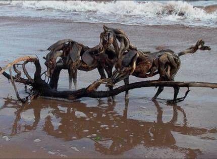 Driftwood sculptures of horses by Heather Jansch (32 pics)
