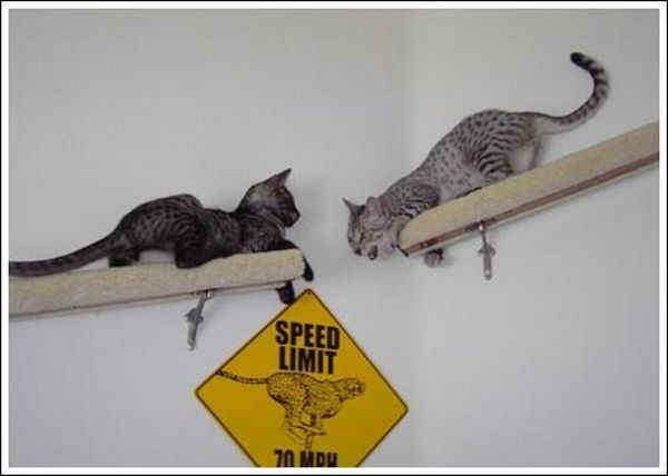 Cool wall stairs for cats (36 pics)