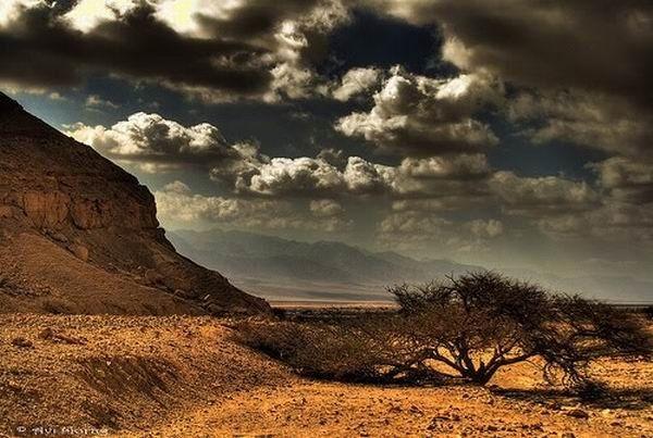 Deserts (50 pics)