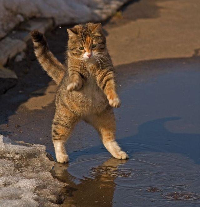 http://img.izismile.com/img/img2/20090928/funny_kitty_01.jpg
