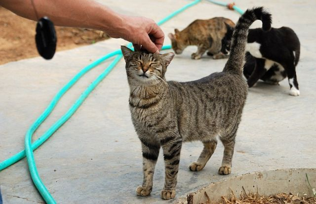 Shelter for cats in Israel (28 pics)
