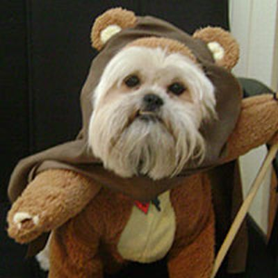 ewok dog costume shih tzu dogs wearing star wars costumes 24 pics izismile com 2761