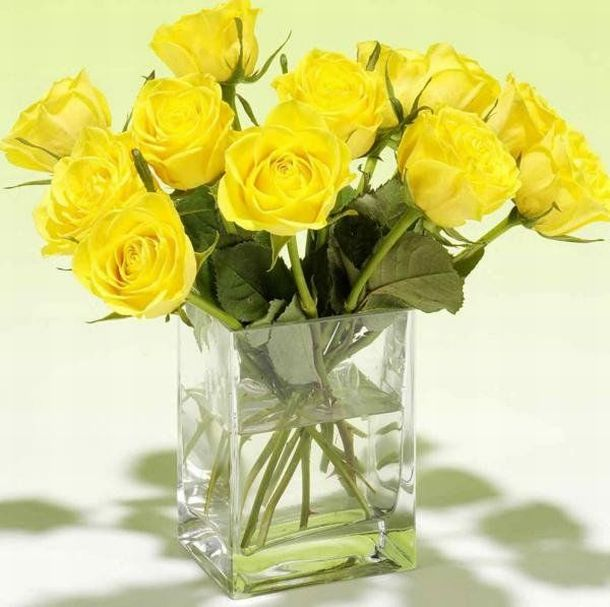 Beautiful yellow roses 32 pics for What color is the friendship rose