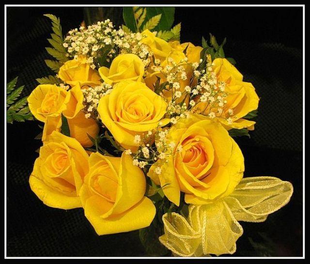 Wallpaper Of Yellow Rose: Beautiful Yellow Roses (32 Pics)