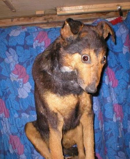 When taxidermy goes wrong (36 pics)