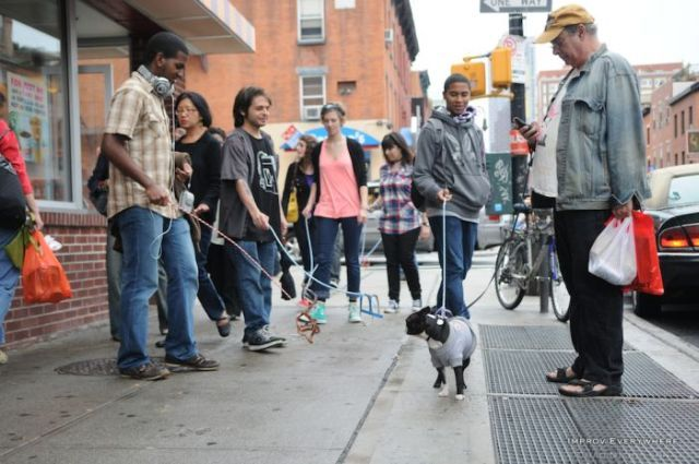 Interesting Flashmob - invisible dogs (22 pics)