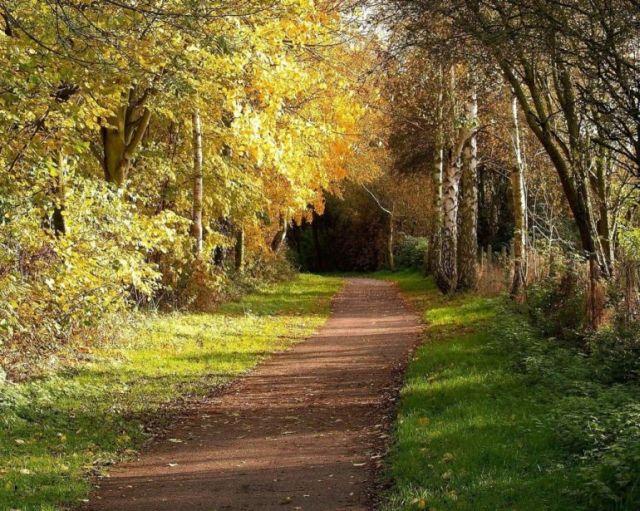 Beautiful autumn (21 pics)