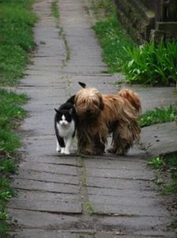 Cute story of a cat and a dog (6 pics + 1 gif)
