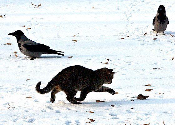 Fierce predators (15 pics)