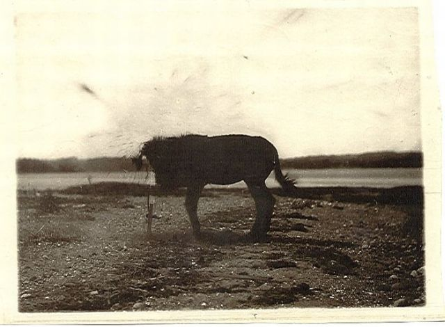 Dynamiting a mule to make the first instantaneous photograph! (5 pics)