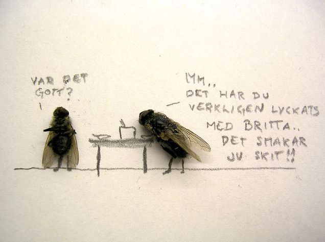 Humor with dead flies! (15 pics)