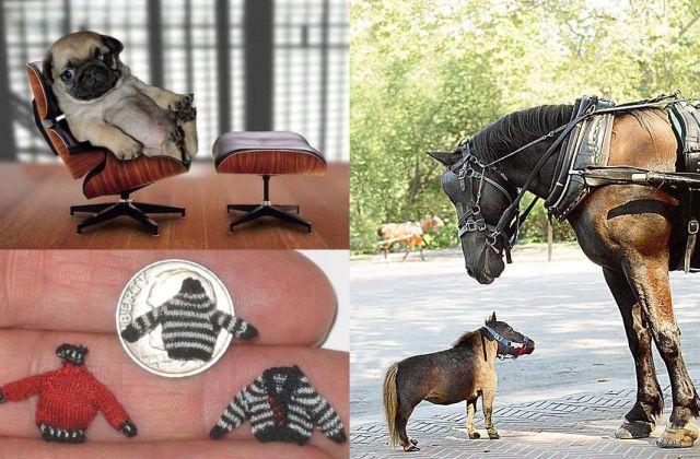 Tiny versions of bigger things (41 pics)
