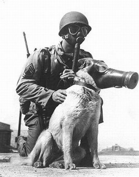 US Army dog gas masks (20 pics)